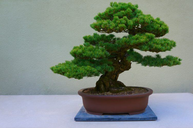 How to Train Your Bonsai