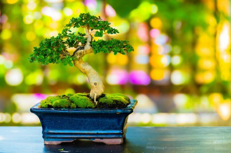 Simple Bonsai Techniques to Try