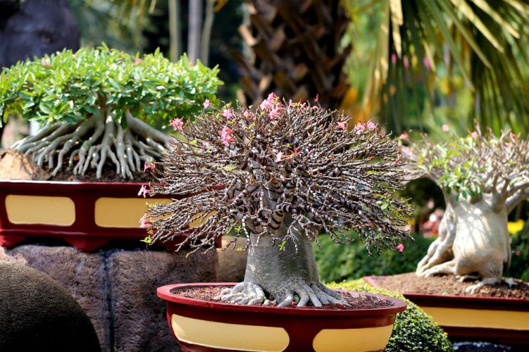 The Various Types of Bonsai Trees