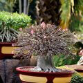The Various Types of Bonsai Trees