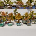 The-5-Basic-Bonsai-Tree-Shaping-Styles