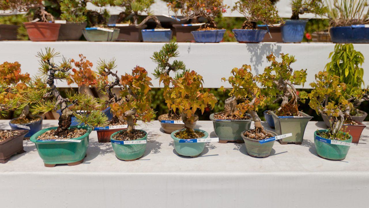 The 5 Basic Bonsai Tree Shaping Styles