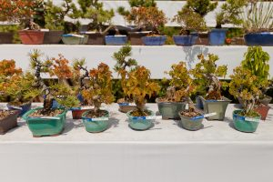 The 5 Basic Bonsai Tree Shaping Styles