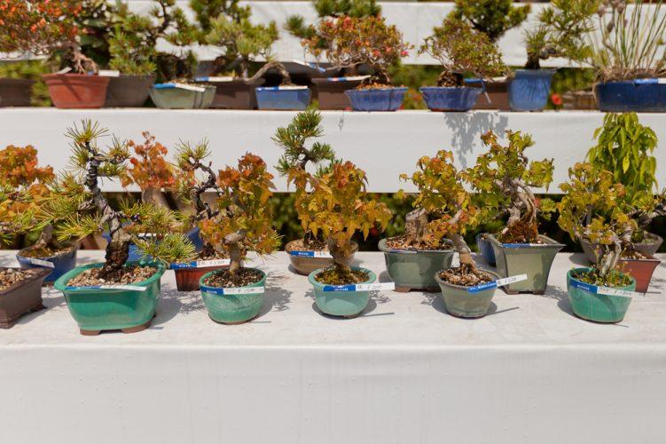 The-5-Basic-Bonsai-Tree-Shaping-Styles