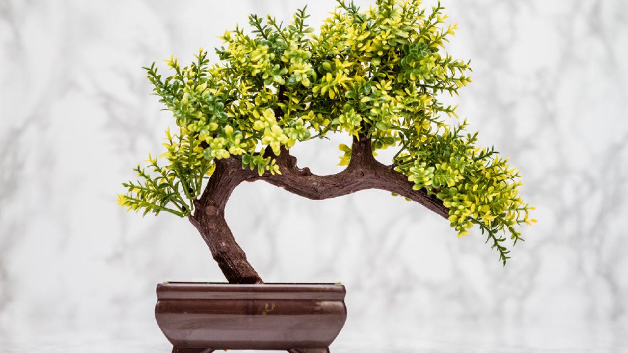 Fake And Artificial Bonsai Trees