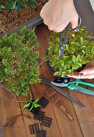 bonsai pruning with tools