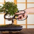 Tools for Bonsai