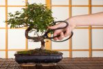 3 Essential Tools for Bonsai